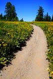 Fält av gula vildblommor och slingan Arkivbilder