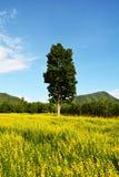 Fält av guling och trädet Royaltyfri Bild