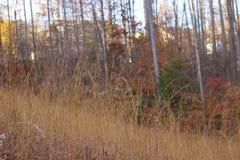 Fält av högväxt gräs, medan solen ställer in Arkivfoto