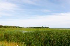 Fält av högväxt gräs på sommardag Arkivbild