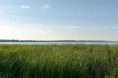 Fält av högväxt gräs på sommardag Arkivfoto