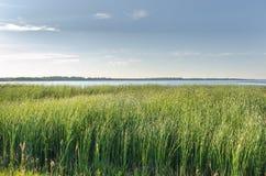 Fält av högväxt gräs på sommardag Royaltyfri Fotografi