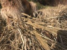 Fält av hunden Royaltyfria Bilder