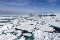 Fält av isflöten, Antarktis Royaltyfri Bild