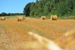 Fält av jordbruk Arkivfoto
