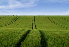 Fält av korn med traktorspår royaltyfri bild