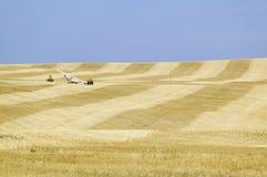 Fält av korn tillsammans med arkivbilder