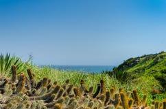 Fält av lösa växter på solig dag med kaktuns och stranden i backg Royaltyfri Fotografi