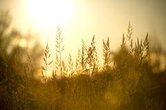 Fält av löst gräs, varm sommarsoluppgång, utrymme för text arkivbilder