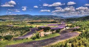 Fält av lavendel i Provence - Luberon Frankrike Arkivbild