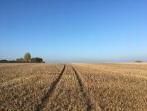 Fält av majsskäggstubb efter skörden, Somerset, England royaltyfria bilder
