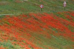 Fält av röda vallmo längs roassiden Royaltyfri Bild