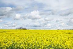 Fält av rapsfröt med det härliga molnet - växt för grön energi Arkivbild