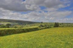 Fält av södra västra England fotografering för bildbyråer