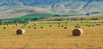 Fält av samlade höbaler med de centrala Kalifornien kullarna i bakgrunden royaltyfri bild