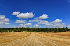 Fält av skördar, moln av skogar och himmel Royaltyfri Fotografi