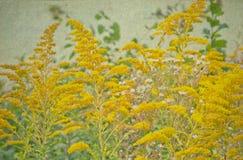 Fält av små gula vildblommor gammalt papper för bakgrund Arkivfoton