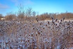 Fält av snöig tistlar Arkivfoto