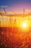 Fält av solen Royaltyfri Fotografi