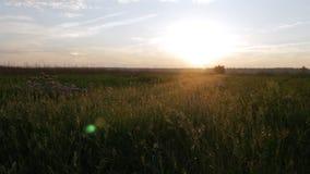 Fält av växter på solnedgången Moving kamera Härlig sky arkivfilmer