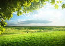 Fält av vårgräs Arkivfoton
