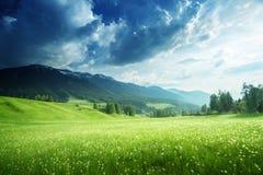 Fält av vårmaskrosor i Dolomites Arkivfoto