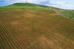 Fält av vingården för rött vindruva Arkivbild