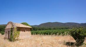 Fält av vinrankor i Luberon - Frankrike Arkivfoton