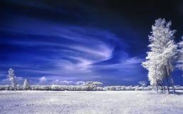 Fält av vitsidor och träd under bluesky Royaltyfri Foto