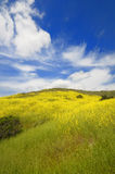fält blommar den wild gröna fjädern Royaltyfri Fotografi