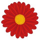 Fält Daisy Red stock illustrationer