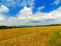 Fält efter skörd och skog Arkivfoto
