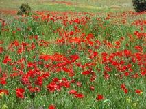 Fält färgade rött Arkivfoto