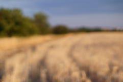 Fält för Blured bakgrundsvete Arkivfoto