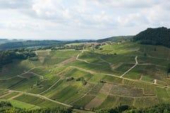 Fält för franskt vin Fotografering för Bildbyråer