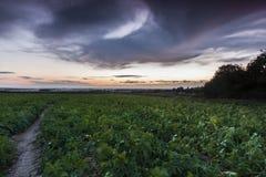 Fält för grön skörd med över huvudet stormiga moln Royaltyfri Bild