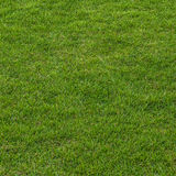 Fält för grönt gräs Royaltyfri Fotografi