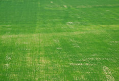 Fält för grönt gräs Royaltyfria Bilder