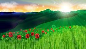 Fält för grönt gräs för blommor för vallmo som landskap röda förbluffar solnedgång, harmonifredbakgrund Arkivbilder