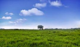 Fält för grönt gräs med den blåa himlen Royaltyfri Fotografi