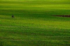 Fält för grönt gräs med en cyklist royaltyfri foto