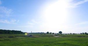 Fält för grönt gräs med floden stock video