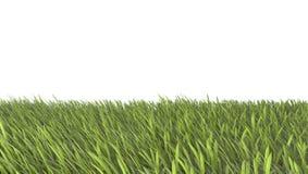 Fält för grönt gräs med med vit bakgrund Royaltyfri Bild