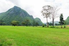 Fält för grönt gräs och bergbakgrund Arkivfoton