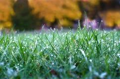 Fält för grönt gräs som är passande för bakgrunder eller tapeter, naturligt säsongsbetonat landskap Arkivfoto