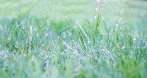 Fält för grönt gräs som är passande för bakgrunder eller tapeter, naturligt säsongsbetonat landskap Royaltyfri Bild