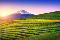 Fält för grönt te och Fuji berg i Japan arkivbild
