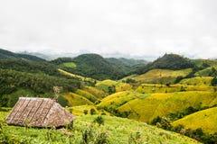 Fält för gul böna royaltyfri fotografi