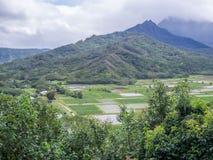 Fält för Hanalei dalTaro på den hawaianska ön av Kauai Royaltyfri Bild