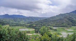 Fält för Hanalei dalTaro på den hawaianska ön av Kauai Arkivfoton